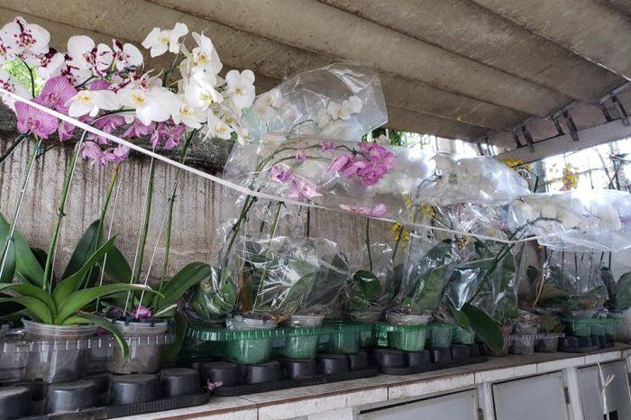 As orquídeas do Calil!
