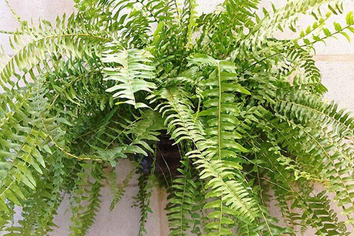 Mau olhado? Energia ruim? Acredite: uma planta pode proteger a sua casa mais do que você imagina!